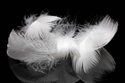 Plumes d'oie blanches
